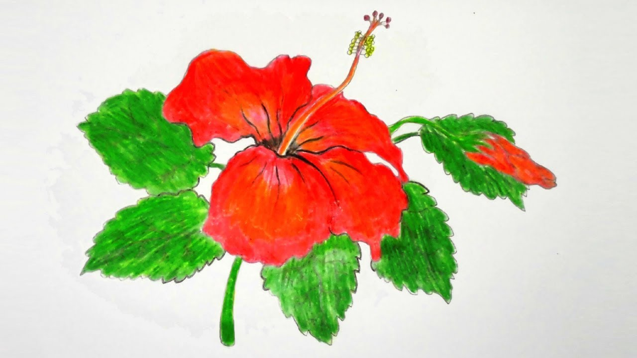 Hibiscus Plant Drawing at GetDrawings.com | Free for personal use ...