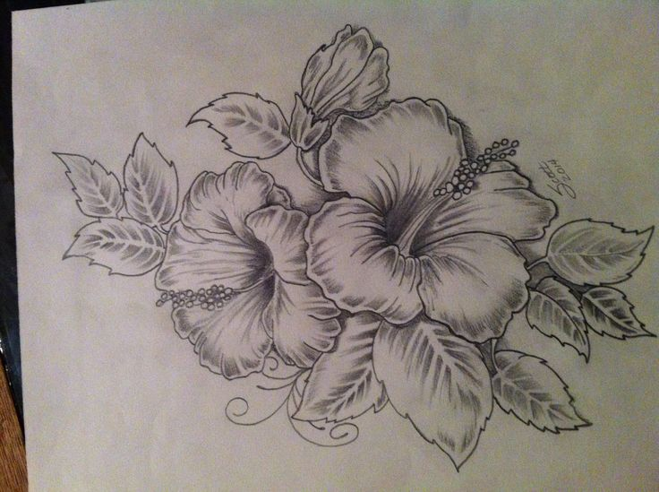 736x549 Hibiscus Tattoo Artwork. My Take On An Existing Design. Will Be