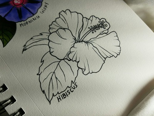 Hibiscus Tattoo Outline: Hibiscus Tattoo Drawing At GetDrawings