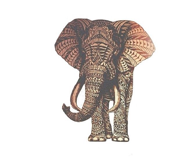 640x576 Hipster Wallpaper Animal