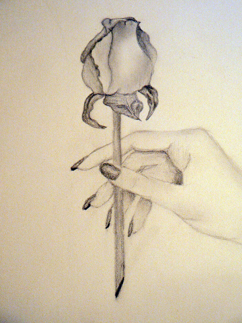 774x1032 Holding A Rose By Cheyenne21