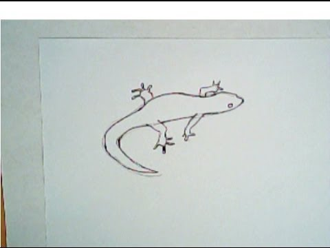 480x360 How To Draw A Lizard (Simple Drawing, Step By Step)