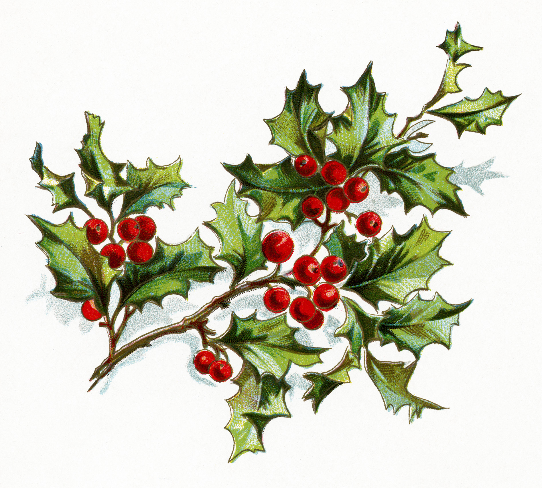 1893x1704 Free Vintage Image Holly And Berries Old Design Shop Blog