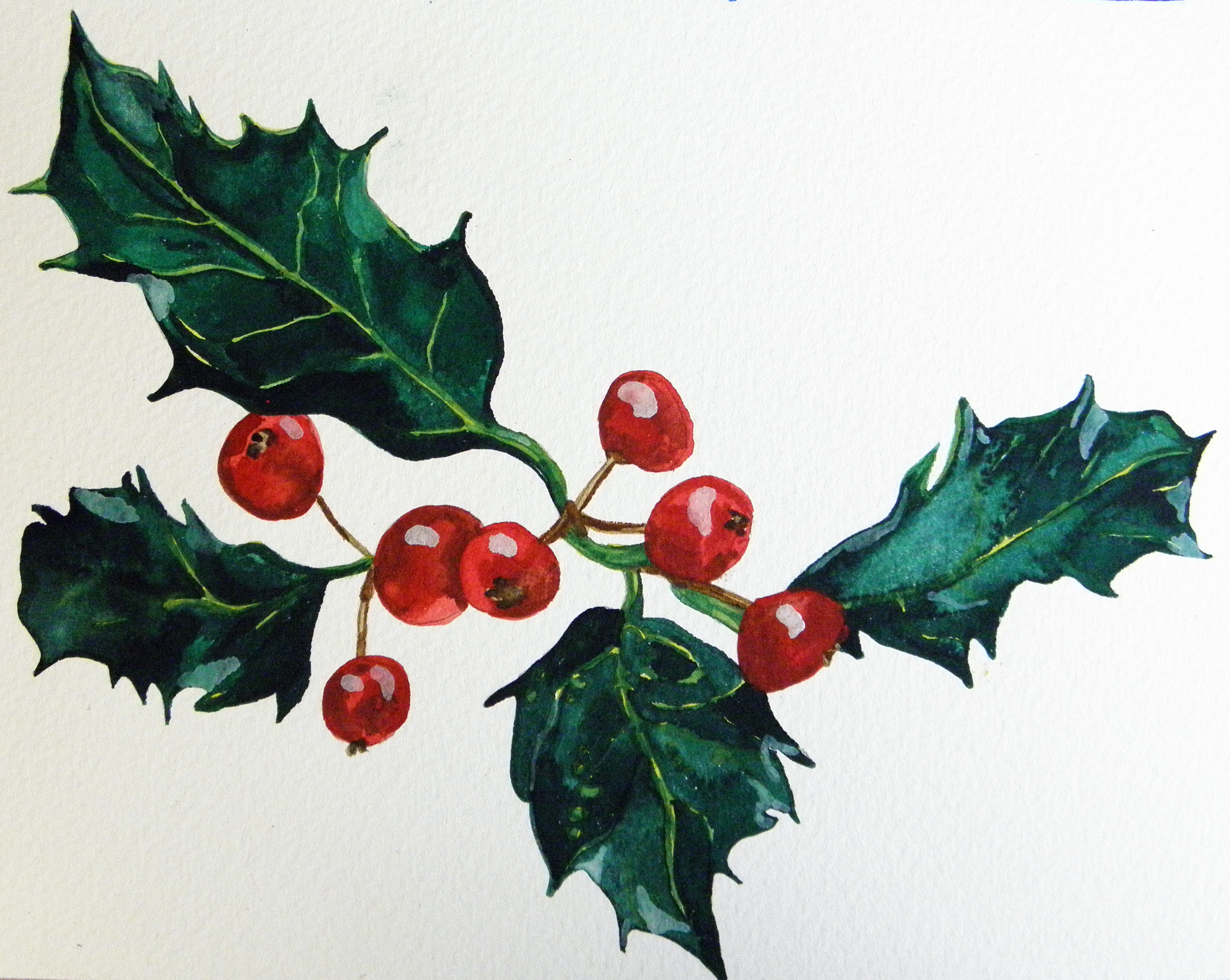 3210x2558 Gallery How To Draw A Holly Bush