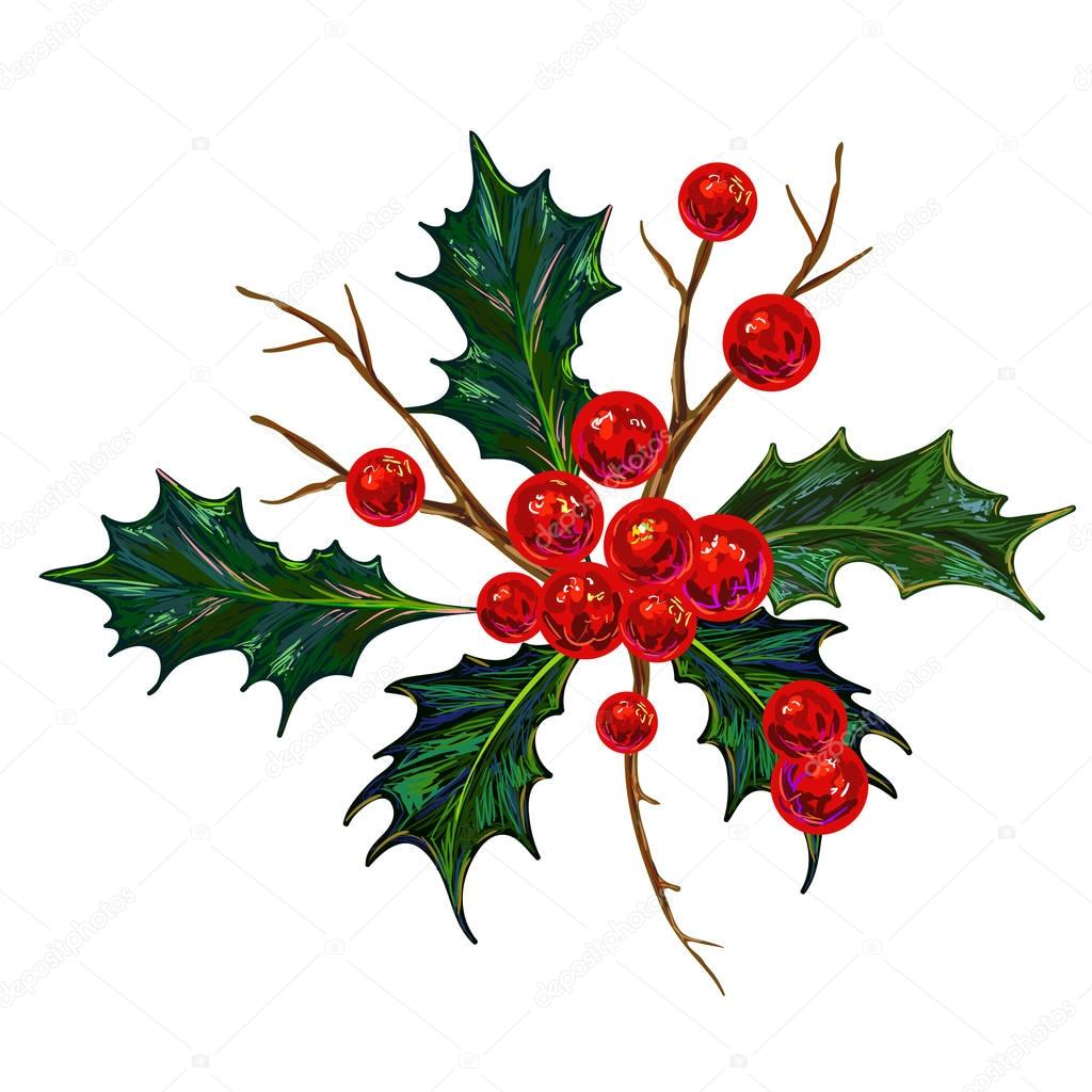 1024x1024 Holly Berry Vector Illustration. Botanical Drawing, Christmas