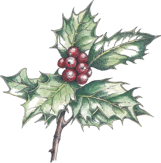 530x535 How To Paint And Draw Holly For Christmas Cards With Judith Milne