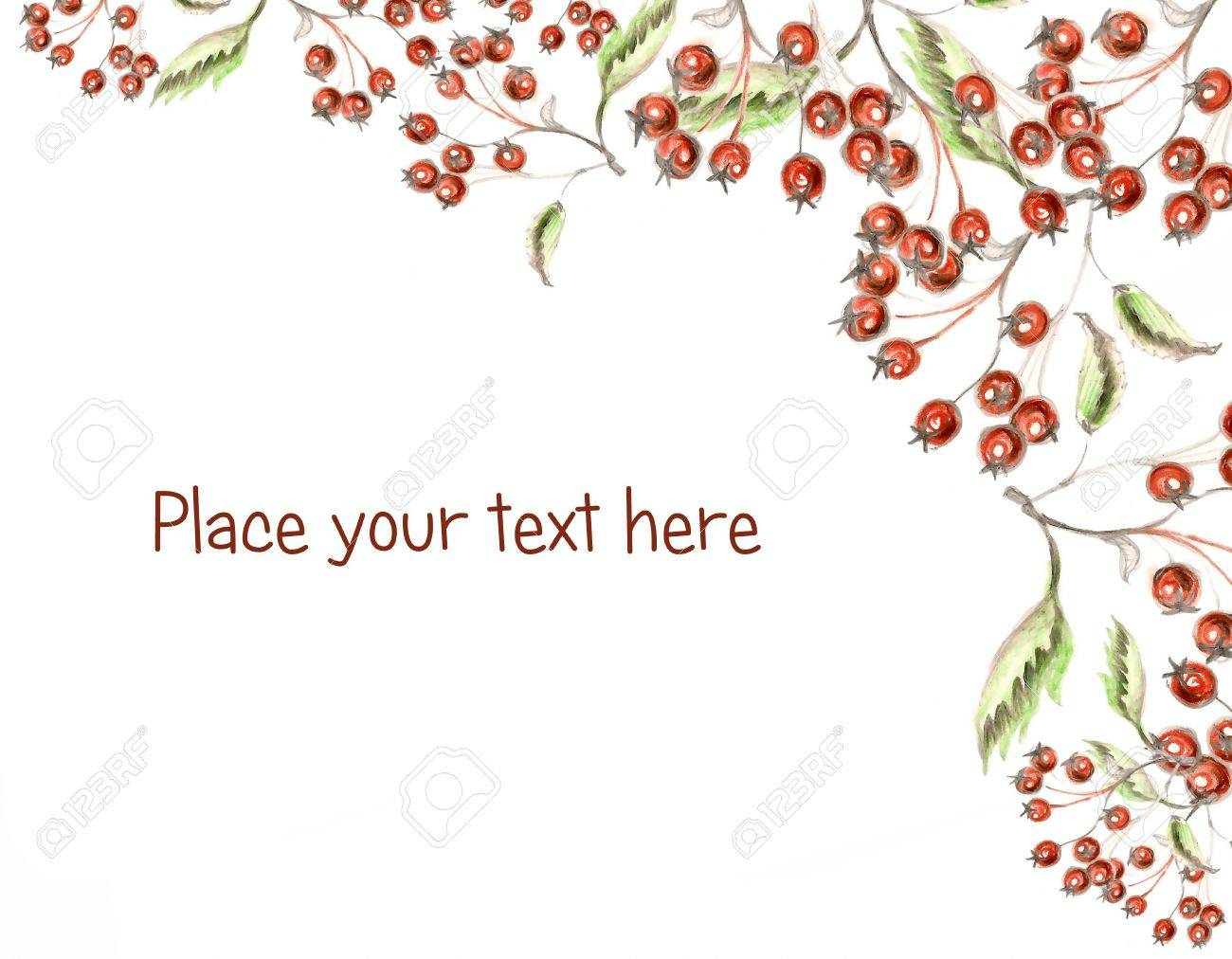 1300x1012 Red Berries Holly Hand Made Drawing With Space For Your Text Stock