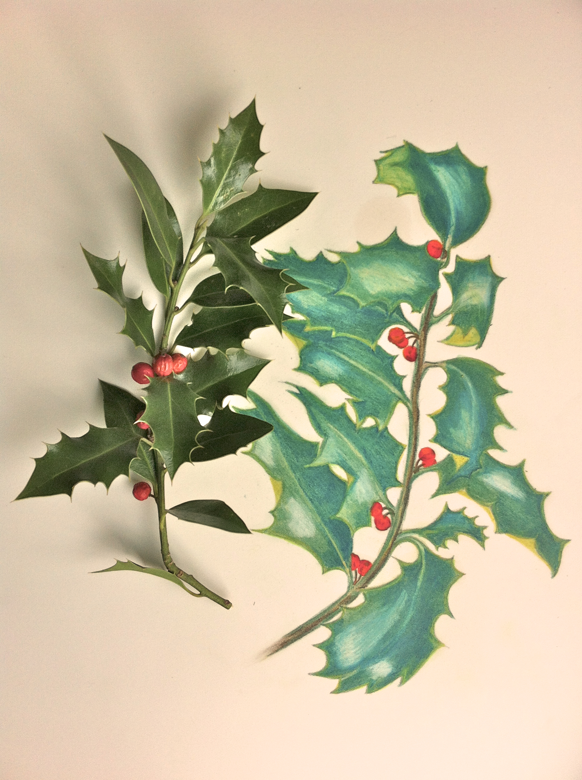 1936x2592 Drawing Holly Leaves. Fine Arts Drawings