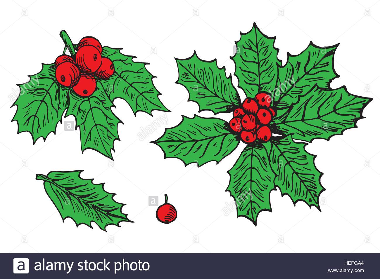 holly leaves and berries drawing at getdrawings com free for