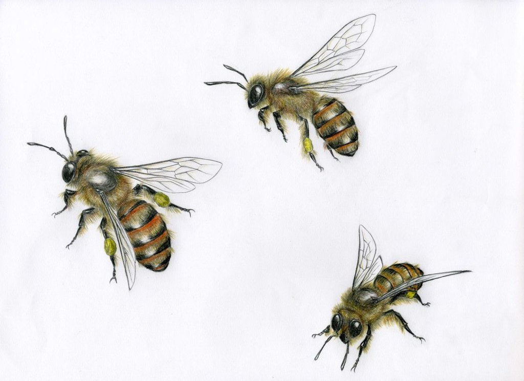 1024x744 Commission Honeybee By Sabwise