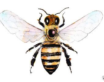 340x270 Honey Bee Drawing Etsy