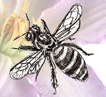 370x339 How To Draw A Honey Bee