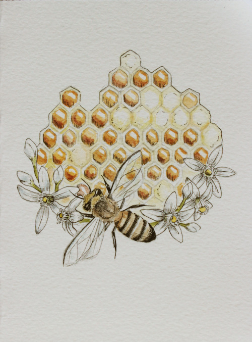 500x677 Drawing Art Painting Design My Art Ink Water Color Honey Bee
