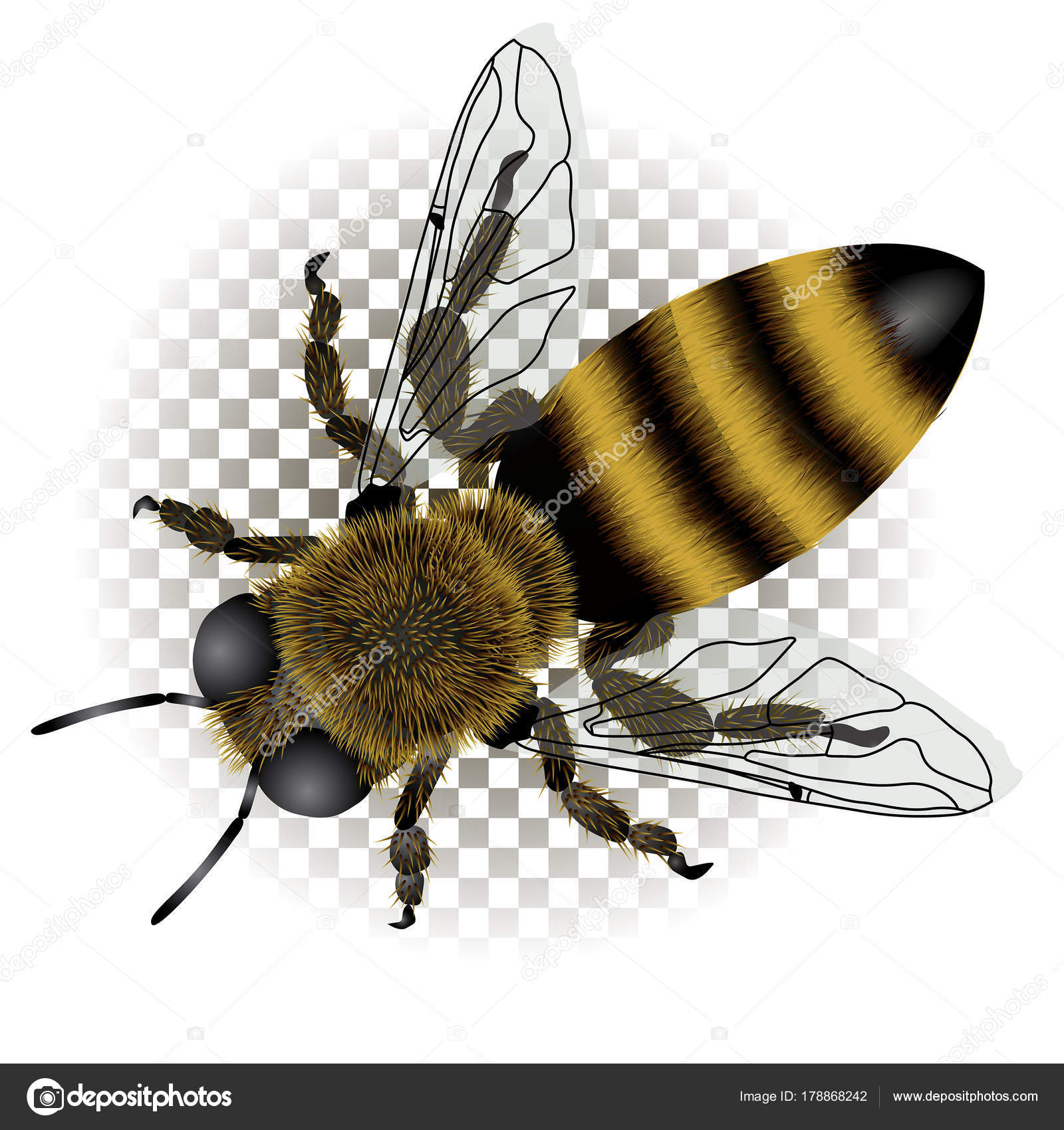 1600x1700 Detailed Drawing Of Bee With Transparent Wings Stock Vector