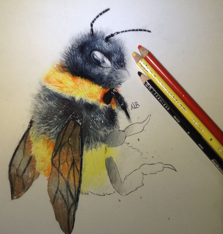 735x770 Drawn Bee Dc Logo 3257521