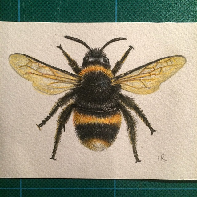 640x640 Drawn Bee Pencil Drawing
