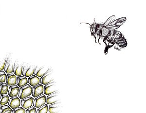 300x234 Honeybee Drawings Fine Art America