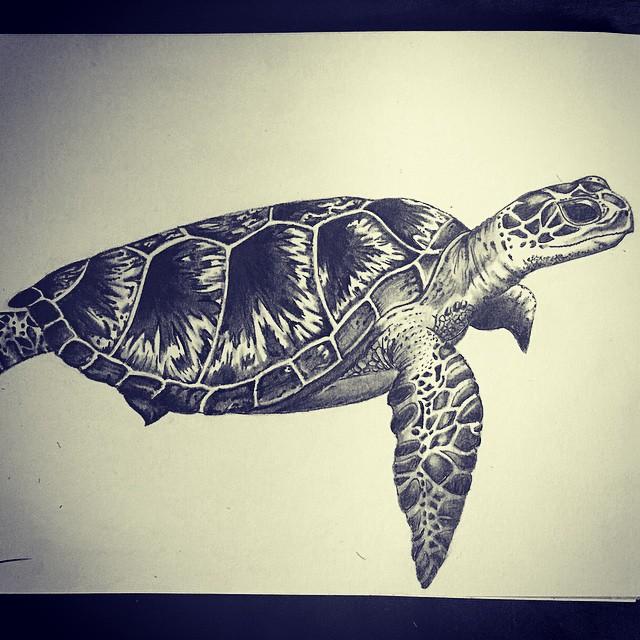 640x640 Drawn Sea Turtle Honu