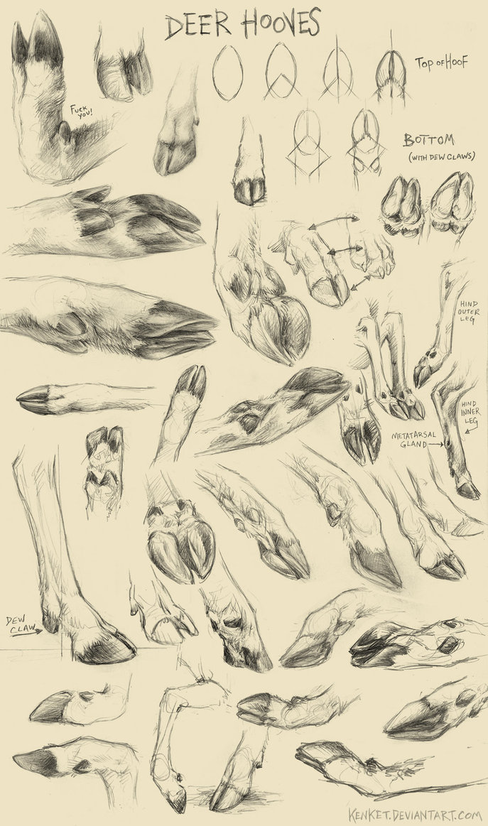 Famous Bovine Hoof Anatomy Sketch - Physiology Of Human Body Images ...