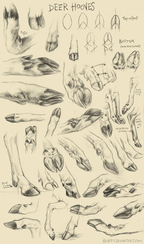 687x1163 Deer Hoof Studies By Kenket