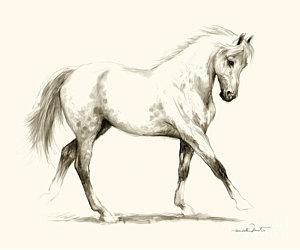 300x250 Horse Hoof Drawings