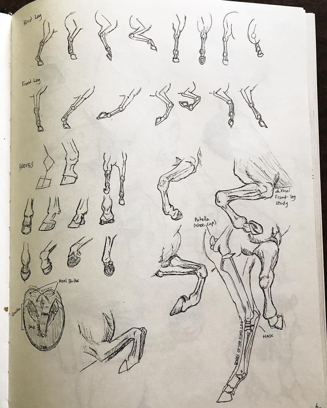 1080x1350 Horse Leg And Hoof Drawing Reference Sheet Animal Drawing