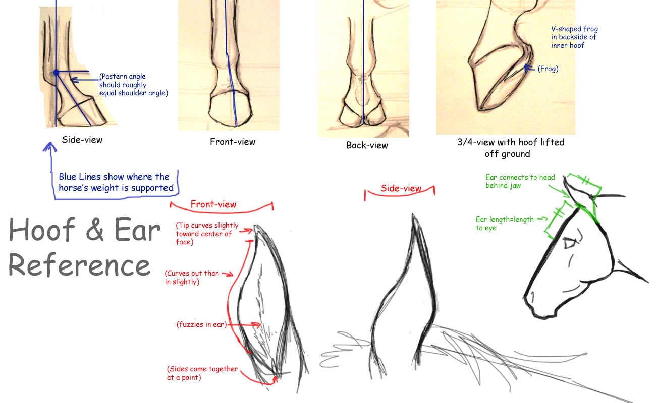 Hoof Drawing at GetDrawings.com | Free for personal use Hoof Drawing ...