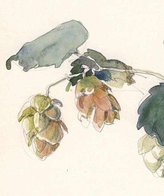 570x682 Hop Flower, Beer Plant. Watercolor Drawing, Print. Original Art By