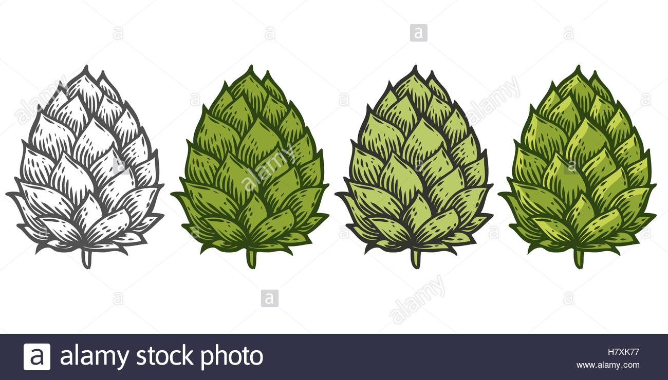 1300x740 Hop Set Green Organic Herb Plant Which Is Used In The Brewery