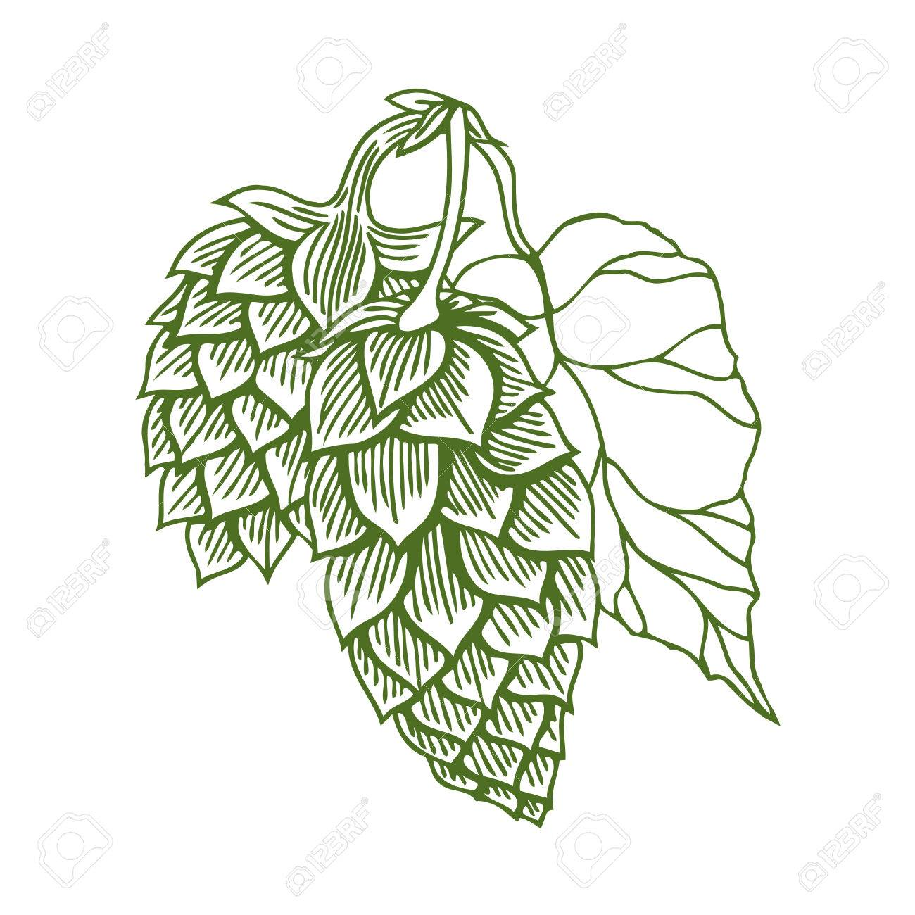 1300x1300 Hops Vector Visual Graphic Icon Or Logo, Ideal For Beer, Stout