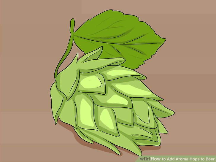 728x546 How To Add Aroma Hops To Beer 6 Steps (With Pictures)