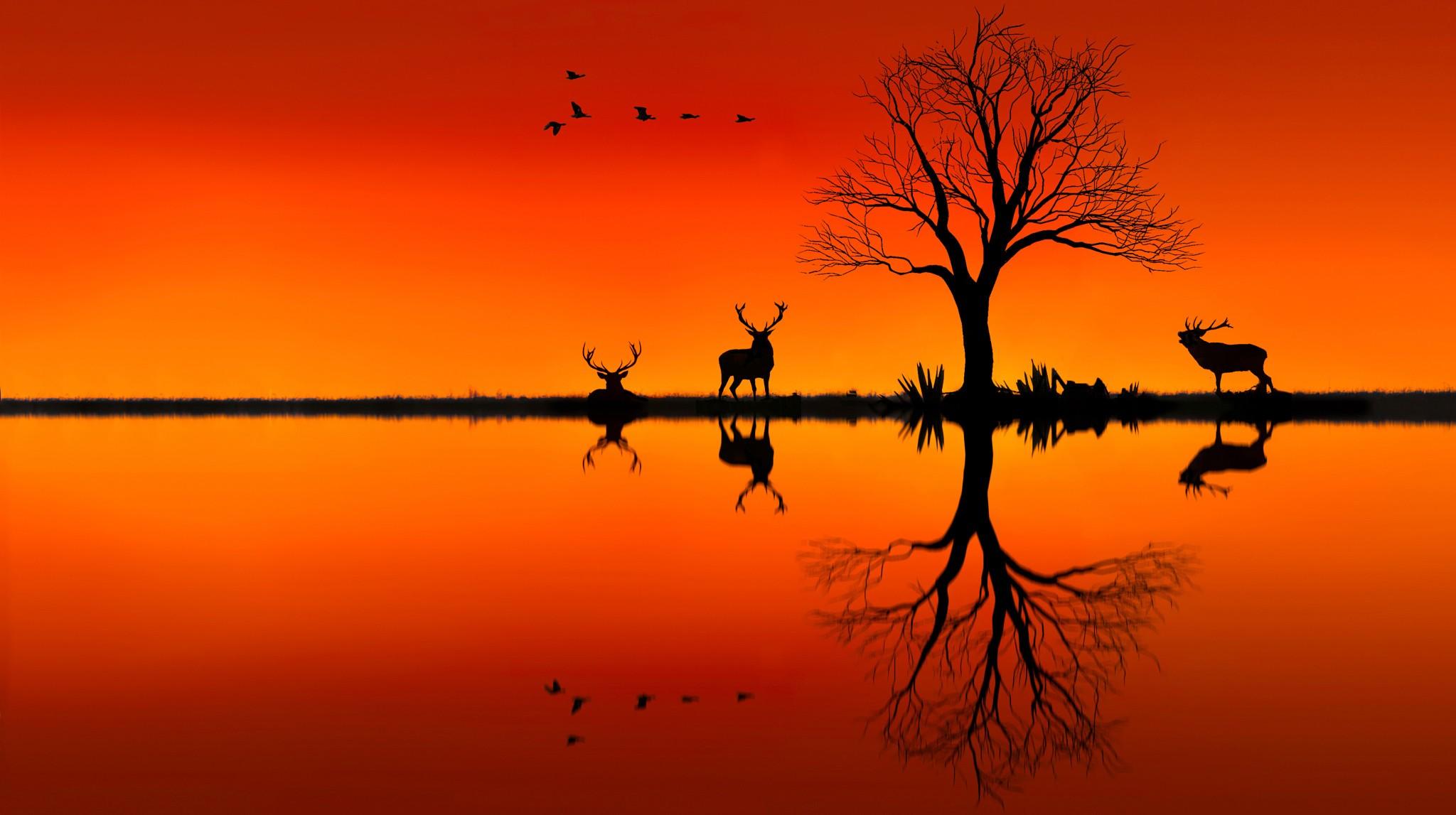 2048x1147 Elk On Horizon Sunset Evening, Hd Animals, 4k Wallpapers, Images