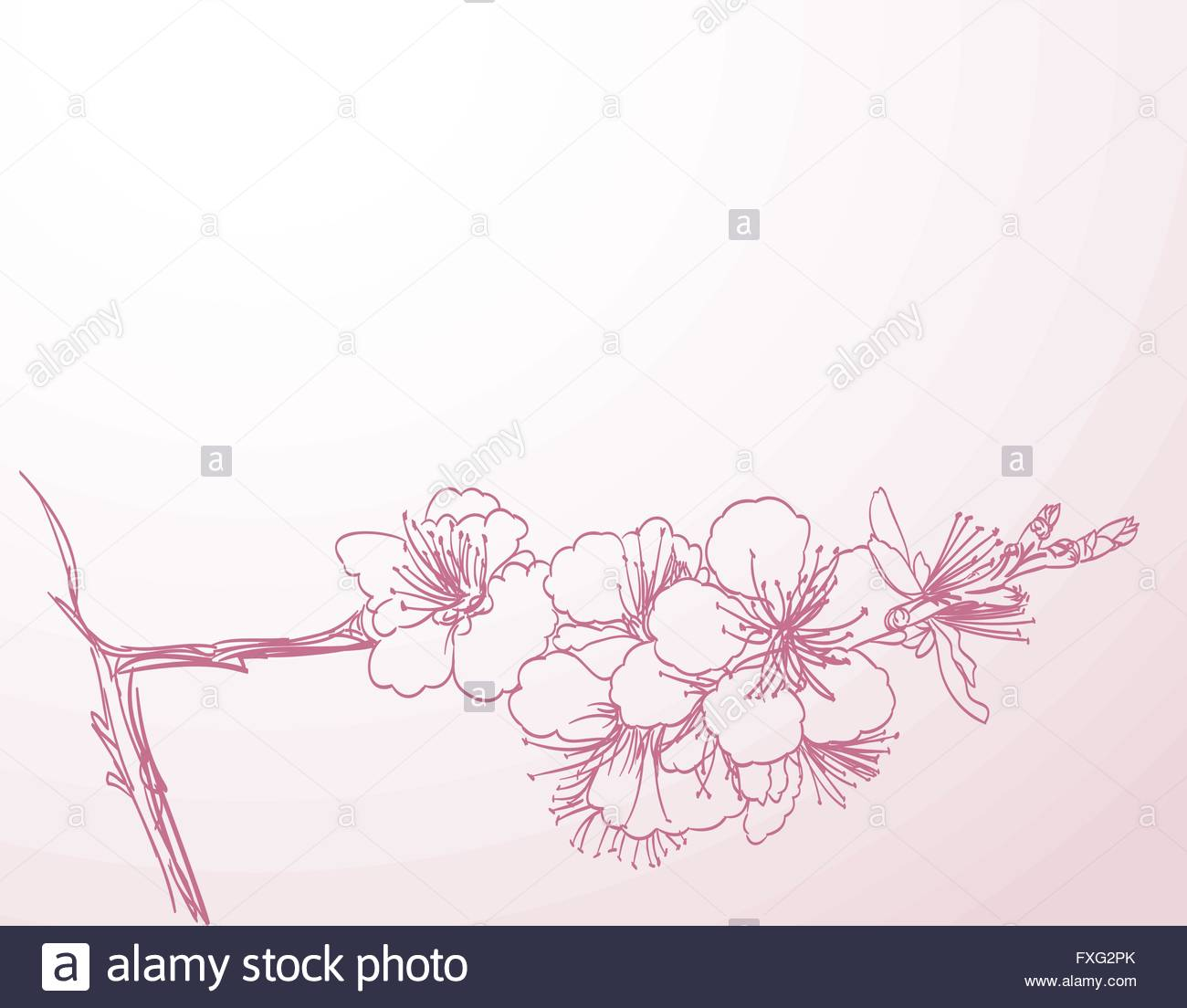 1300x1104 Blossoming Tree Line Art Hand Drawing. Spring Stylish Horizontal