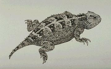 358x222 Lizard