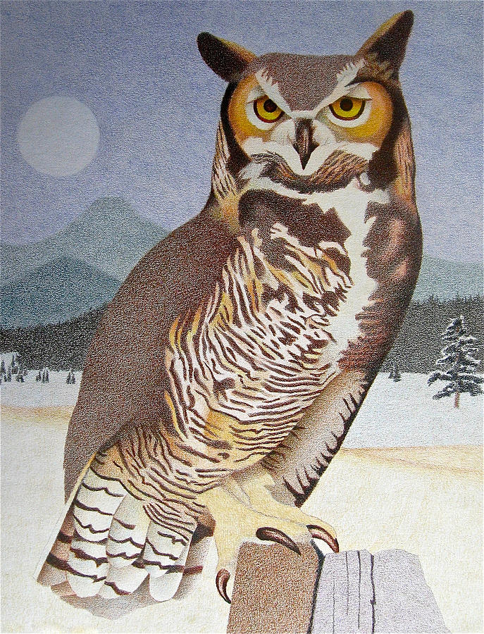 687x900 Great Horned Owl Drawing By Dan Miller