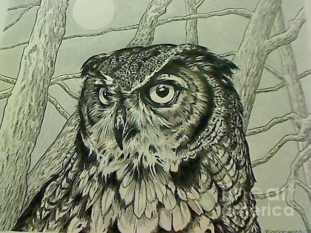 640x480 Great Horned Owl Drawing By Kimberlee Ketterman Edgar