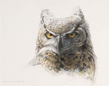 442x350 Horned Owl Sketch Related Keywords Amp Suggestions