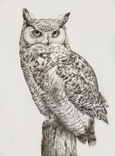 438x592 Ink Drawing Of A Great Horned Owl