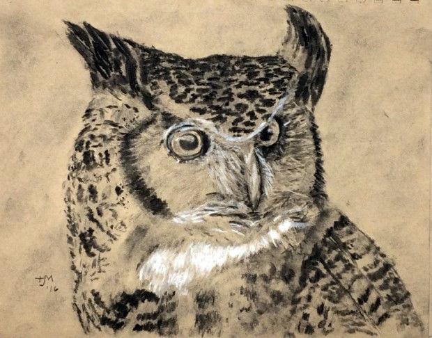 620x486 Prowl For Owls In Seekonk, Attleboro, Norfolk Go