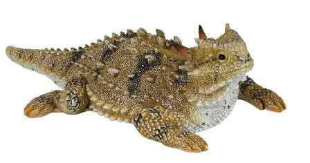 448x236 Horned Toad Figurine Berdoll Pecan Candy And Gift Company