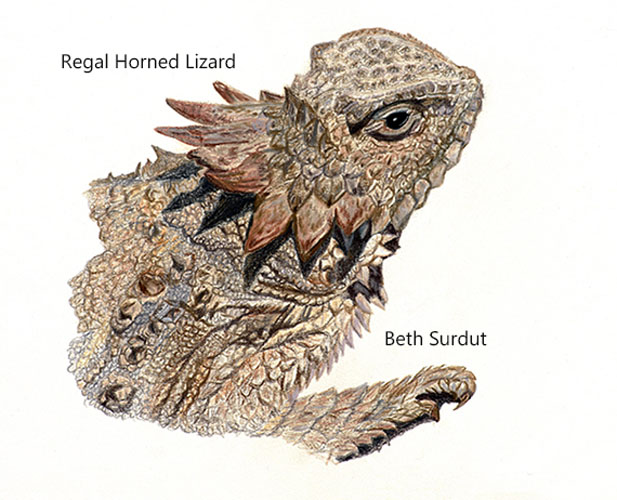 617x500 The Art Of Paying Attention Regal Horned Lizard