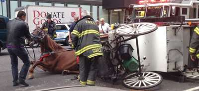 400x183 Carriage Horse Accidents