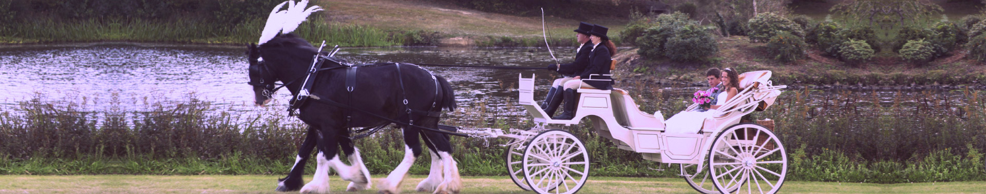 1920x378 Carriages For Sale Carriage Types Horse And Carriage Wedding
