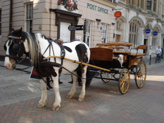640x480 Photos Horse Drawn Carriage,