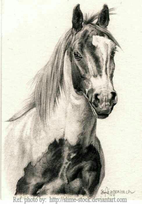 488x701 Pin By Capri Jolie On Art .chevaux, Le Monde