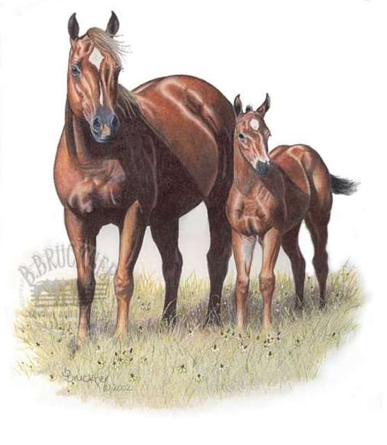 557x640 Brenda Bruckner Artwork Quarter Horse Mare And Foal Original