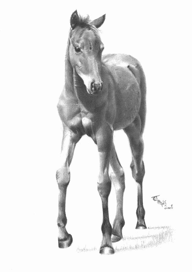 636x900 Foal Drawing By Ed Teasdale