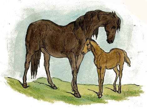 469x349 Horse Amp Foal Drawing