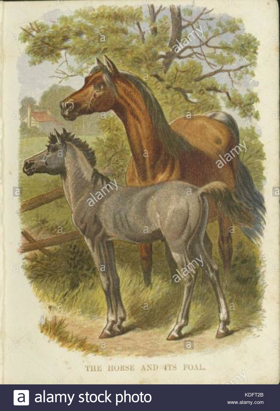 946x1390 Horse With Foal Drawing Stock Photo, Royalty Free Image 163232003