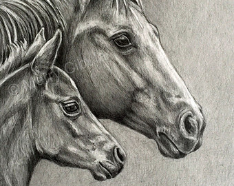 340x270 Items Similar To Pinto Or Paint Horse Mare And Newborn Foal Pencil